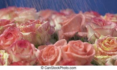 rose, mouvement, lent, dolly:, jaune, eau, roses, gouttes, tomber, fleurs, crème