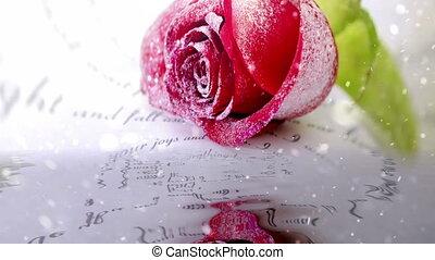 rose, neiger, eau, rouges, refléter
