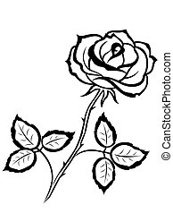 rose, noir, contour