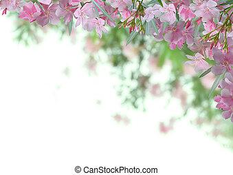 rose, oleander, fleur, fond