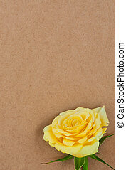 Rose on a background paper.