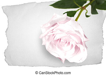 Rose on an old piece of paper