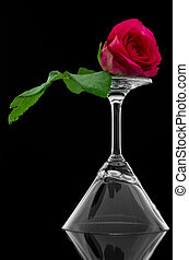 Rose on empty cocktail glass
