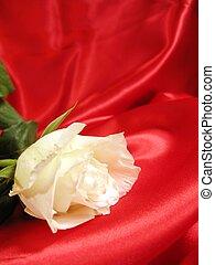 Rose on red satin