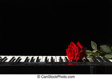 Rose on the keys of the electronic synthesizer on black...