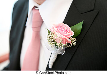 Rose on the suit - Image of beautiful pink rose on the...