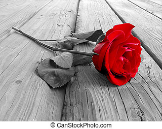 Rose On Wood BW - red rose on wood floow - black and white