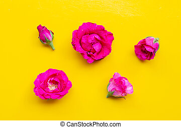 Rose on yellow background. Top view
