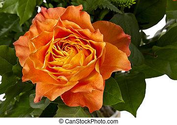 rose orange, 303