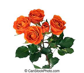 rose orange, fleurs