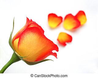 rose orange, jaune