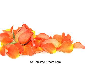 Rose over petals