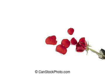 rose, pétales