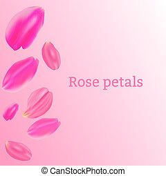 rose, pétales, ensemble, fond, rose