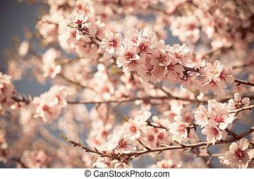 rose, pêche, printemps, arbre, fleurir, fleurs