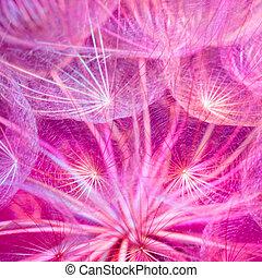 rose, pastel, vif, coloré, pissenlit, résumé, -, fond, flowe