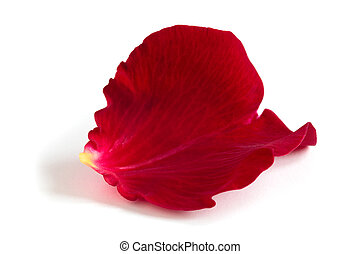 Rose petal. - Red rose petal isolated on white background.