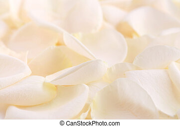 Rose petals - Abstract background of a fresh beige rose...