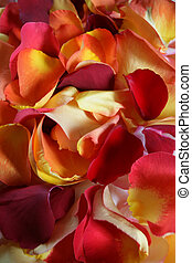 Rose petals - Background image of rose petals for spa, ...