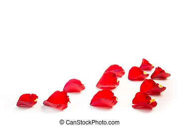 rose petals border with space for the text