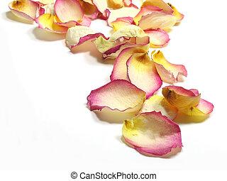 Rose Petals - Dried rose petals over white