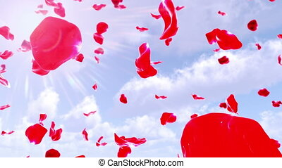 Rose Petals Falling from Sky (Loop) 4K - Calm background...