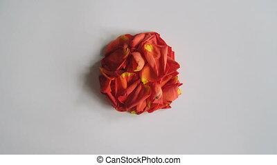 Rose petals frame animation