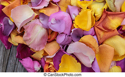 Rose petals in the colors of a sunset