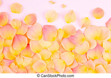 Rose petals on a light background