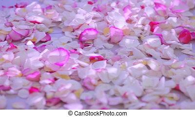 Rose petals on floor