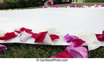 Rose petals on road