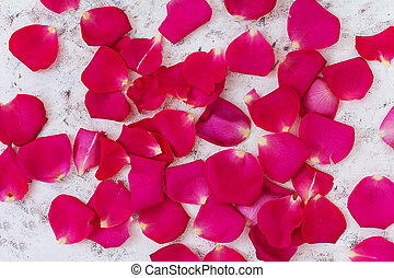 Rose petals on white background. Top view