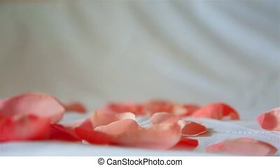 Rose petals pink blown away by the wind on a white background HD 1920x1080