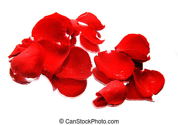 rose petals with reflection isolated over white