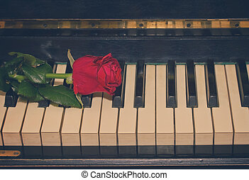 rose, piano, rouges