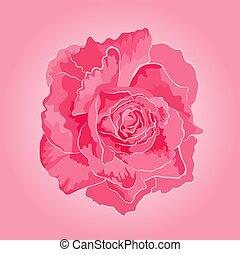 Rose pink  symbol  of love vector