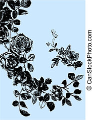 rose, plante, dessin, illustration