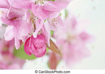 rose, printemps, arbre, fleurs