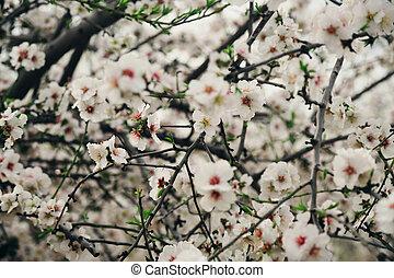rose, printemps, fleurs blanches, fleurs