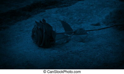 Rose Put On Grave Stone At Night - Person puts rose on grave...