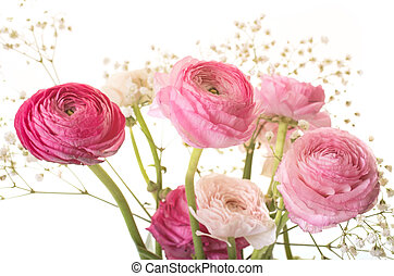 rose, ranunculus, asiaticus