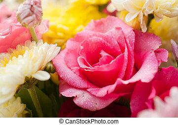 rose rose, closeup