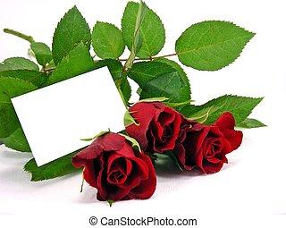 rose rosse, con, scheda regalo