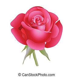 rose., rotes