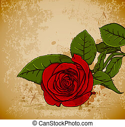 rose, rotes , weinlese