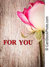 rose rouge, fleur, sur, bois, fond