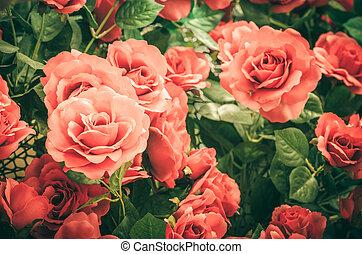 rose rouge, fleur, vendange