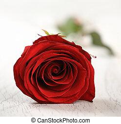 rose rouge, pour, vacances, sur, les, vendange, bois, fond