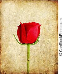 rose rouge, sur, vieux, grunge, papier, fond