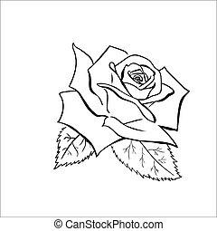 Rose sketch. Black outline on white background. Vector ...